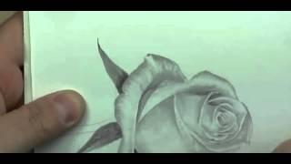 Рисуем розу карандашом | Crash ROSE #17(Рисование, как рисовать, рисовать карандашом, научиться рисовать, уроки рисования, как научиться рисовать,..., 2015-10-04T17:01:57.000Z)