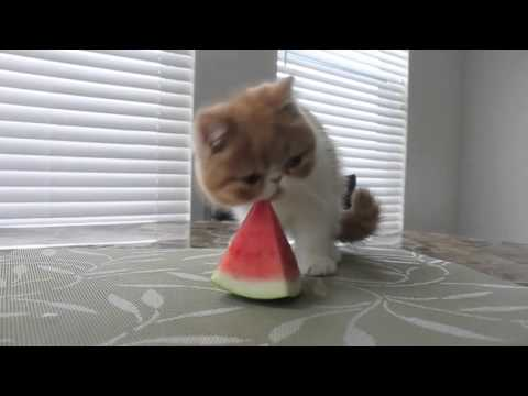 Funny cats,  funny dogs, cute animals - Animal Compilation April 2016 | Funny Berry Animals #65