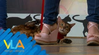 ¡Los gatos más extraños están en Venga la Alegría!