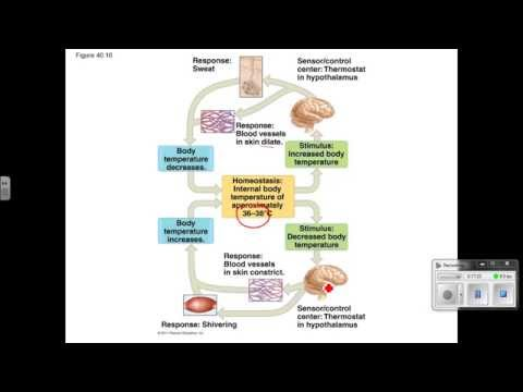 Homeostasis Video Lecture