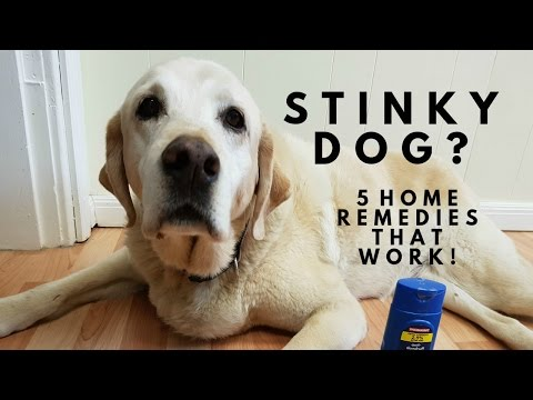 Stinky Dog? 5 Home Remedies That Work!