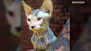 Краснодарцы требуют проверить ветврача, набивавшего тату котам