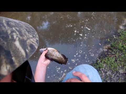 Weird Canal Fish In Florida!