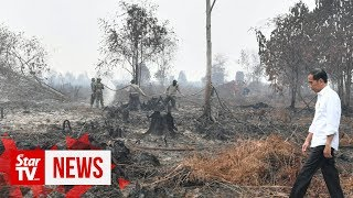 Jokowi inspects burnt forests, calls for investigation