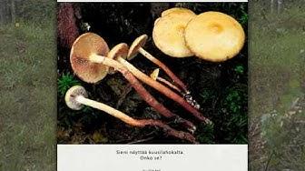 Suomen ruokasienet CD-Facta (2001)