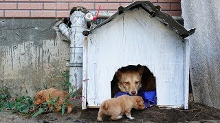 Building New House For Homeless Puppies is Very Easy