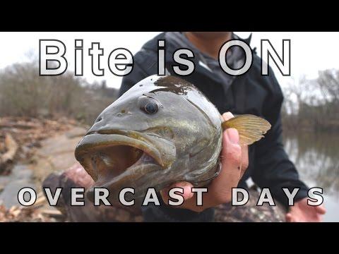 Overcast Days For Good Bass