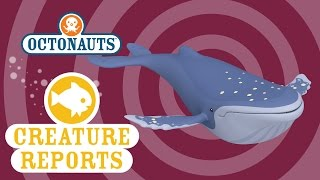 Octonauts: Creature Reports - Humpback Whale