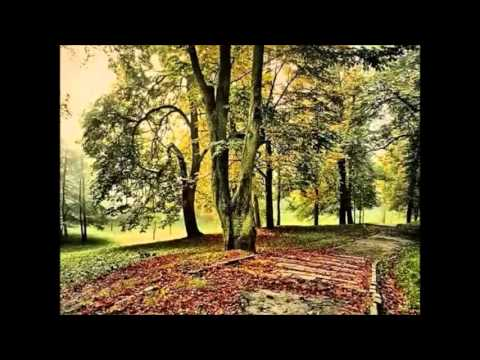 Matthew Drive - Live forever (polish version)