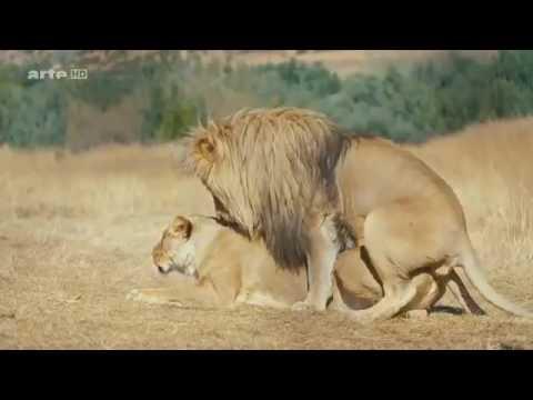 Die außergewöhnlichsten Tiere der Welt Doku 2017