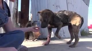 история умирающего, больного, брошенного, бездомного пса. Спасение для каждого.