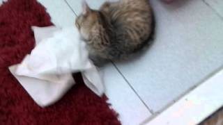 Моя бешеная кошка ей 3 месяца