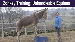 Zonkey Training: Touching the Un-handleable Equine