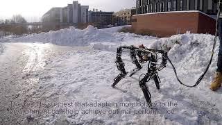 DyRET: Dynamic Robot for Embodied Testing