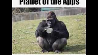 The Most Funny Gorilla's In The World 2015 - Gorilla Ape Meme