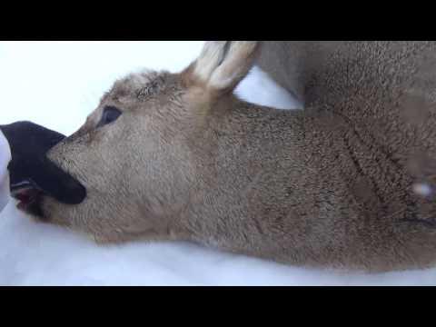 Удачная охота на косулю и тест майки с обогревом от магазина warmer-world