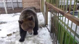 Медведи за свободное общение