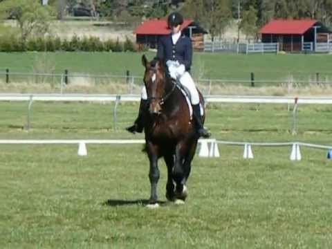The Belstone Fox at Bowral Dressage Prelim 1B with a score of 65.2