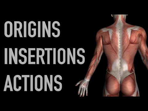Deltoid Muscles - Origins, Insertions & Actions - Black Background