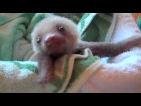 Sally Sloth - Author visits Sloth Sanctuary