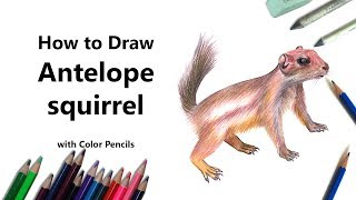 How to Draw a Antelope squirrel with Color Pencils [Time Lapse]