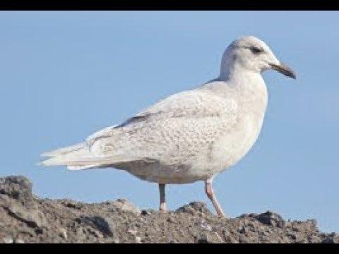Birding with BQ - What a Dump!