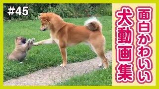 世界のおもしろ可愛い犬動画をまとめました! チャンネル登録お願いしま...
