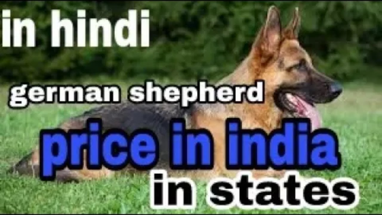 German Shepherd Price In Indian Rupees Ll Dogs Biography Youtube