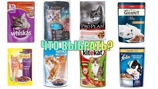 Дорого vs Дёшево влажные кошачьи корма. Чем отличаются дорогие корма от дешёвых?