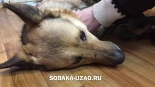 Снятие швов после операции Джосси. Приют Щербинка SOBAKA-UZAO.RU