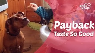 Dog Steals Cracker From Laughing Baby in High Chair