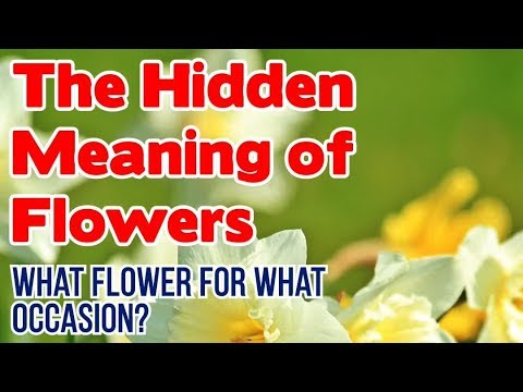 The Hidden Meaning Of Flowers