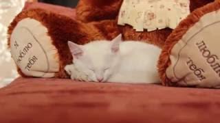Появился котенок. Реакция взрослого кота. Часть 1