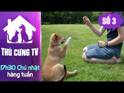 Thú Cưng TV - Số 3 (P2) - Làm Sao để Huấn Luyện Thú Cưng? | YouTV