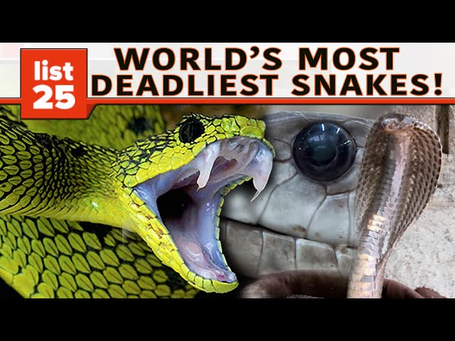 25 Of The World's Most Venomous Snakes (Super Deadly)
