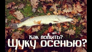 Как и на что ловить щуку осенью? Все хитрости и секреты ловли щуки осенью!