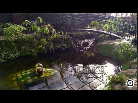 McPuddock - Winter Gardens Aberdeen