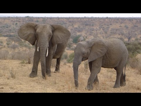 19-day Kenya and Tanzania African Wildlife Safari (2014)