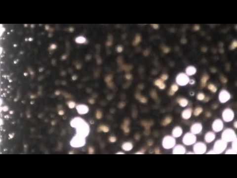Different Fountains - Muybridge