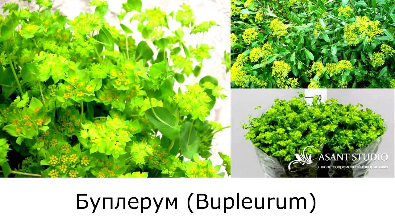 фото цветы и названия