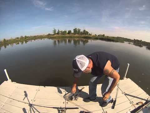 Colorado River Flathead Catfish from YouTube · High Definition · Duration:  4 minutes  · 3,000+ views · uploaded on 5/26/2015 · uploaded by TD Fishing