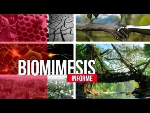 CURADORES P05 - Informe Biomímesis