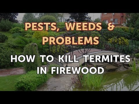 How to Kill Termites in Firewood