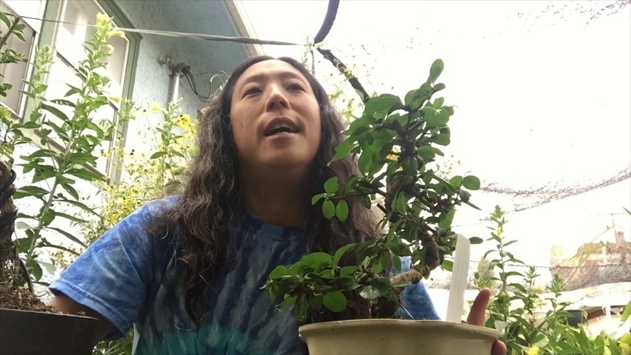 Orchid Hunters Bonsai For Orchid Mounting Youtube