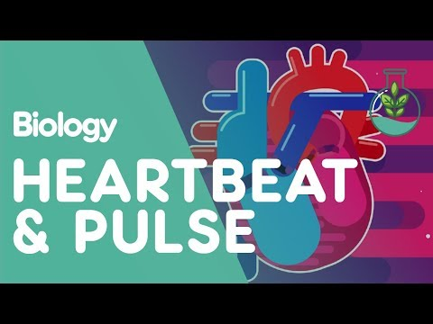 Heartbeat and Pulse | Biology for All | FuseSchool