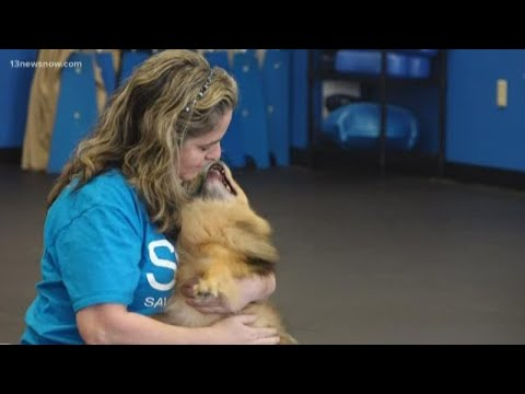 MAKING A MARK: Local Veterinarian Helping To Rescue One Animal At A Time