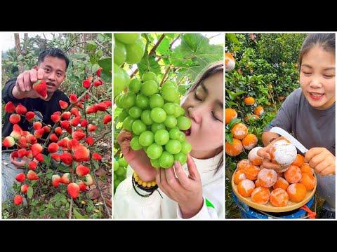 😍Farm Fresh Ninja Fruit | Tik Tok China | (Oddly Satisfying Fruit Ninja) #56