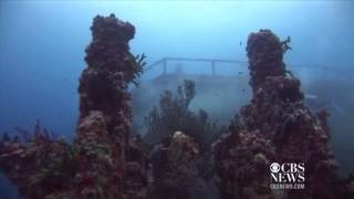Artificial reef: 10 years of growth