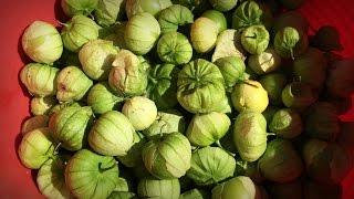 Growing Tomatillos | Iowa Ingredient