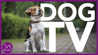DOG TV  Deeply Entertaining Video For Dogs To Watch (NEW)